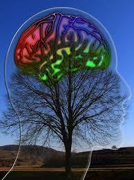 La différence entre le cerveau gauche et le cerveau droit